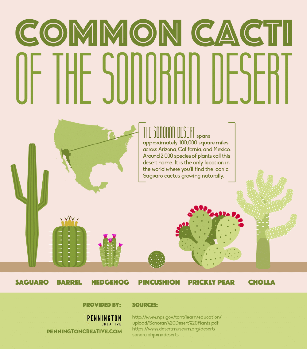 Common Cacti of the Sonoran Desert Infographic