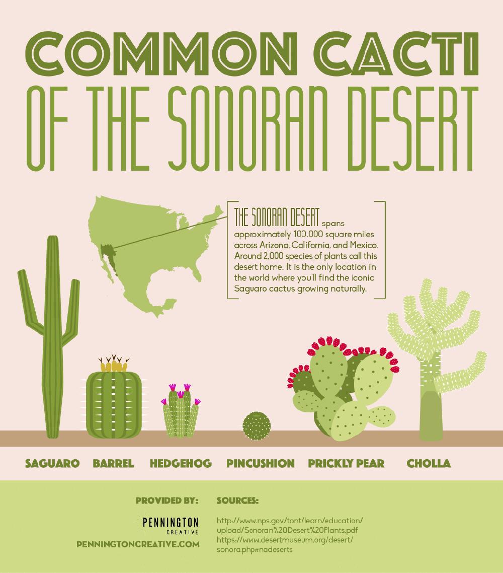 Common Cacti of the Sonoran Desert Infographic