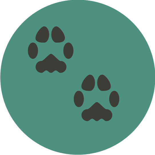 paw print pet care icon