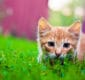 Stock image for pet care content marketing showing a kitten playing in the grass.