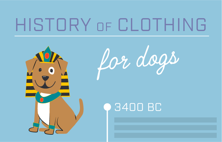 Illustrations showing an example infographic about the history of dog clothing.