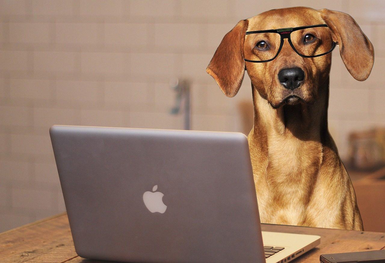 Photo of a dog wearing glasses and using a laptop computer.