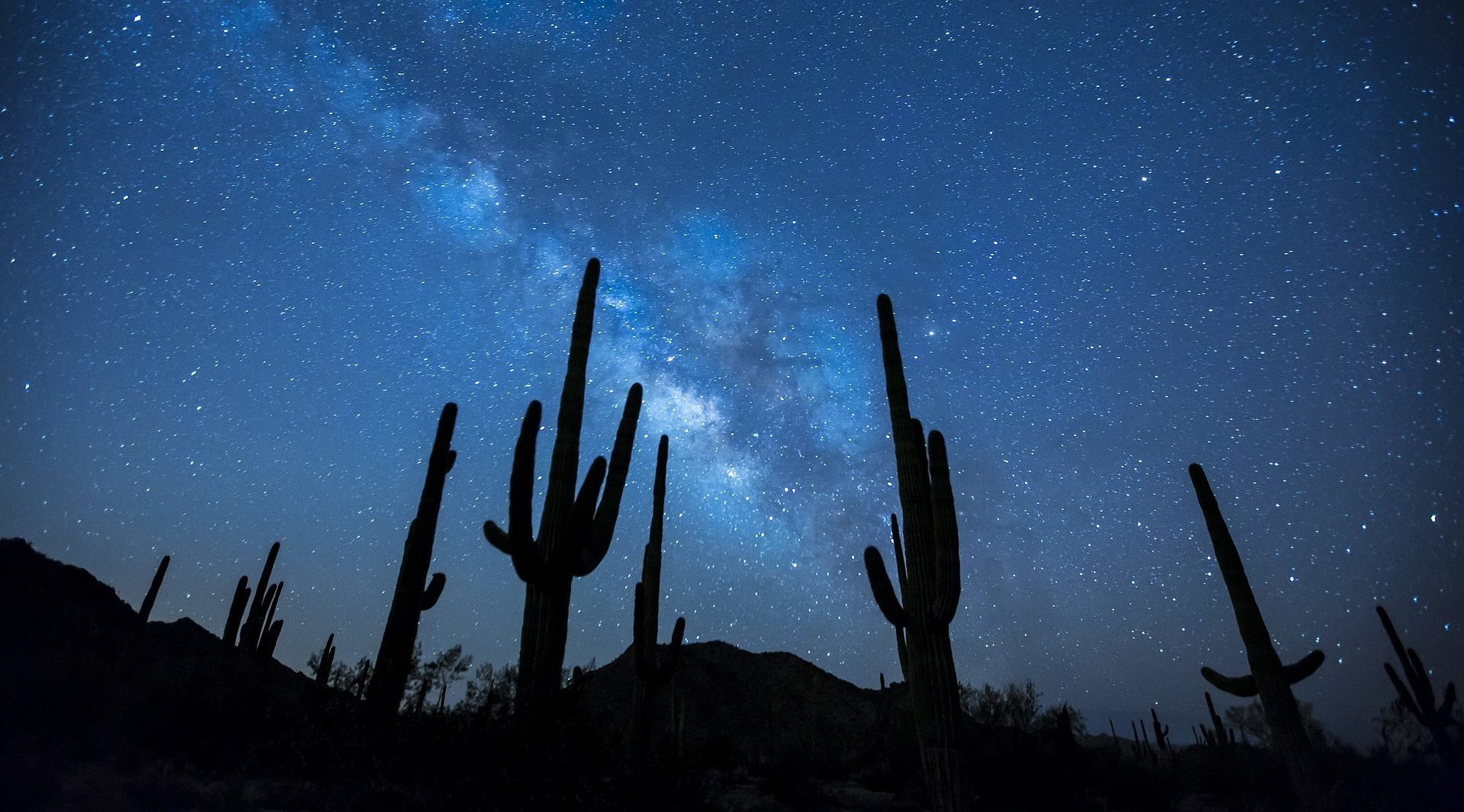 Photo of saguaro cacti at night with the Milky Way in the background.